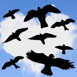Mix des 8 Oiseaux...