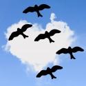 Ensemble des 4 Oiseaux Autocollants de Protection Pour les Fenêtres...