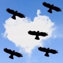 Ensemble des 5 Oiseaux Autocollants de Protection Pour les Fenêtres...