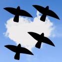 Mix des 4 Oiseaux Autocollants de Protection Pour les Fenêtres V6